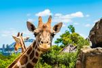 [NSW] 40% off Full-Priced Adult, Concession and Child Tickets to Taronga Zoo Sydney