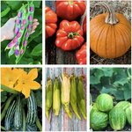 Spring Veggie Seed Value Pack (6 Varieties) + Organic Dill Seeds, Normally $30.50 Now $19, Free Shipping @ Veggie Garden Seeds