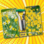 Daffodils – 100 Bulbs and Planter for $39 + Shipping @ Garden Express