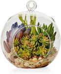 House & Home: Artificial Succulent in Terrarium, Succulent in Pot - Gold, Artificial Banana Leaf Plant $5 @ Big W