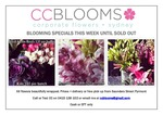 Blooming Flower Specials This Week Until Sold Out From $15 A BUNCH Sydney Only