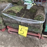 [NSW] Sir Walter Buffalo Turf $5.50 @ Bunnings Northmead (Nearly 4 Pallets Available)