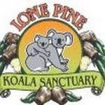 Free Live Stream of Koalas @ Lone Pine Koala Sanctuary
