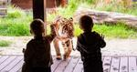 No Joining Fee on Taronga Zoo Friends Membership (Save $20) $99; 1 Adult & 2 Kids