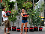 City of Sydney Free Tree Giveaway [March 12th]