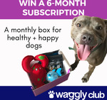 Win a 6-month subscription from Waggly Club