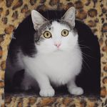 Free Cat Adoptions (over 6 Months Old) at Lort Smith, Save $105 (North Melbourne, VIC)