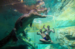 Win 2x Cage of Death Crocodile Experience in Darwin Worth $260 from Travello App