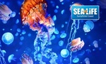 [QLD] SEA LIFE Sunshine Coast 2-for-1 Offer for $39 @ Groupon