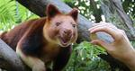 [NSW] Taronga Zoo Sydney & Western Plains Zoo Dubbo $1.00 Admission on Your Birthday 2019 Offer