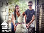 Half Price Adoptions (Cats $45, Dogs $175) - RSPCA SA Lonsdale 20-22 March