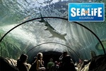 SEA LIFE and WILD LIFE SYDNEY ZOO only $16/each from groupon