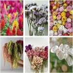 Flower Seeds to Grow, Cut + Dry Pack (6 Varieties), $12 Delivered (Was $28, Excludes WA / NT) @ Veggie Garden Seeds
