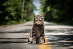 Win 1 of 10 Double Passes to Pet Sematary from Moviehole