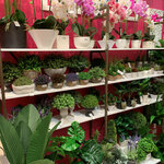 20% off All Artificial Plants & Flowers, Free Delivery @ HomeShoppe