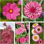 Pink Flower Seeds Pack (5 Varieties) $10 + Free Shipping @ Veggie Garden Seeds (Excludes WA/NT)