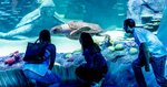 [NSW] Free Entry for Dad (with a Full Priced Ticket) @ Sea Life Aquarium