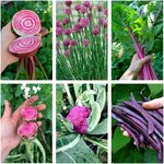 Spring Veggie Garden Seed Pack (6 Varieties) $10 (Normally $21) + Free Shipping