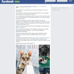 [GEELONG, VIC] Adoption of Cats over 6 Months Old: FREE after Application. Kittens down to $180