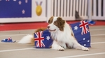 Win 2 Tickets to The Dog Lovers Show from Ticket Wombat (QLD)