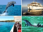 Dolphin Watch Cruises @ Jervis Bay for Just $17, Normally $35