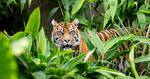 [NSW] 50% off Tickets to Taronga Zoo Sydney