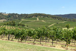 Hunter Valley Wine Tour with Stop at Wildlife Park $100/Adult via Around Sydney Tours