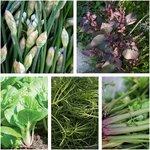 Asian Herb + Veggie Seed Pack (5 Varieties) $10 + Free Shipping @ Veggie Garden Seeds (Excludes WA/NT)