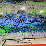 "[NSW] Samsung 82"" UA82TU8000 UHD 4K TV - $2399.99 In-Store @ Costco Auburn (Membership Required)"