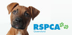 RSPCA QLD - All Cats and Dogs (over 4 Months) $50 to Adopt in April