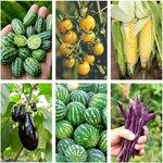 Summer Veggie Seed Pack (6 Varieties) $14 + Bonus Basil Seeds + Free Shipping @ VeggieGardenSeeds (Excludes WA, NT)